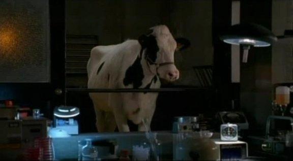 Fringe S3x09 Marionette - Observant Gene the Cow