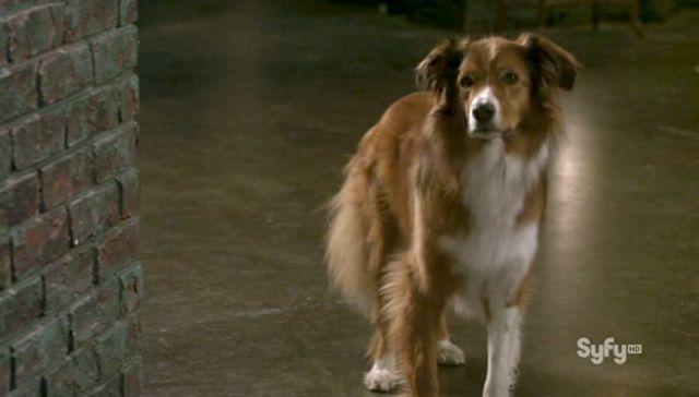 Warehouse 13 S3x10 Trailer Dog